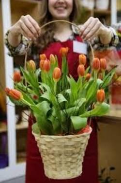 Mandje tulpen