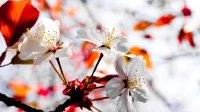Voorjaarsbloesem in roze en wit